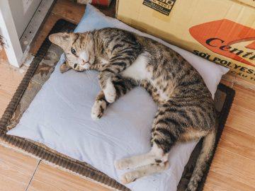 chat allongé à côté d'un carton